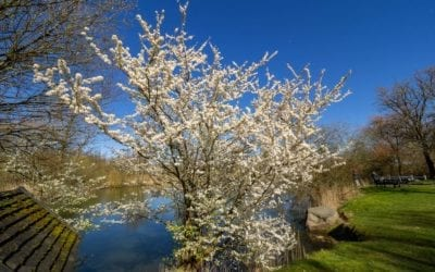 En forårsdag på Lolland